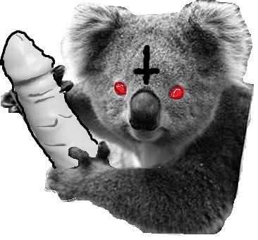 Evil koala