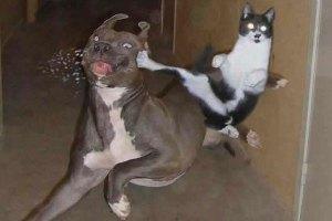 Animal on Animal abuse. Fucking Animals.