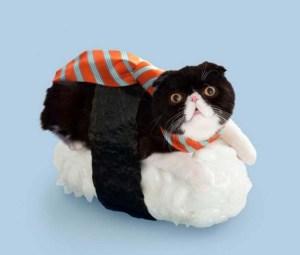 (sob sob) Sushi (sob) cat